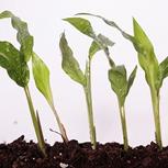 <p>Como os seres humanos, as plantas também podem sofrer de estresse. Saiba o porquê.</p>